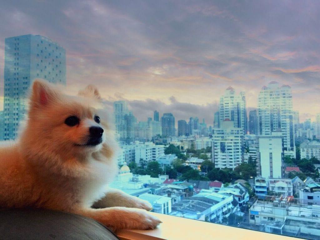 Pet Friendly Accommodation in Bangkok